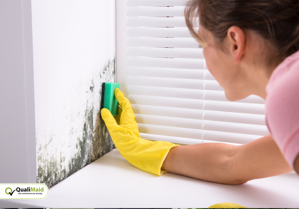 Mould and Moss Removing